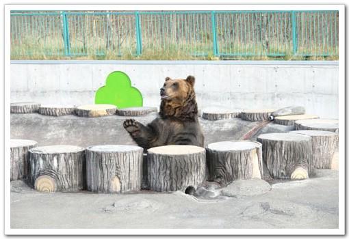 95.11.2北海道餵豬泡湯之旅(6)–釧路市動物園 @愛吃鬼芸芸