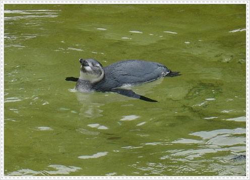 96.08.27 舊金山動物園(SF ZOO) – (上)