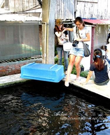 出國比賽常得獎的欣昌錦鯉養魚場 @ 詔安好客