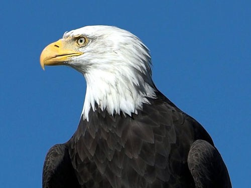 Eagle_1280_960_600.jpg