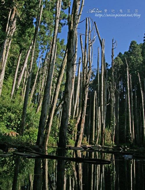 南投.忘憂森林,傳說中的台灣九寨溝