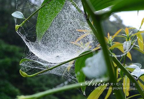 福山植物園_004.jpg