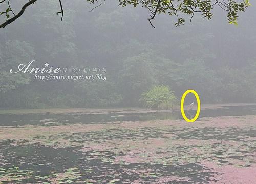 福山植物園_011.jpg