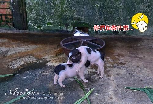 宜農牧場_018.jpg