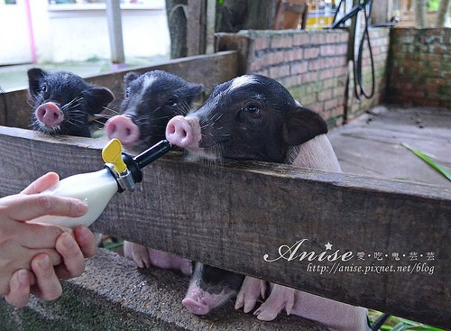 宜農牧場_024.jpg