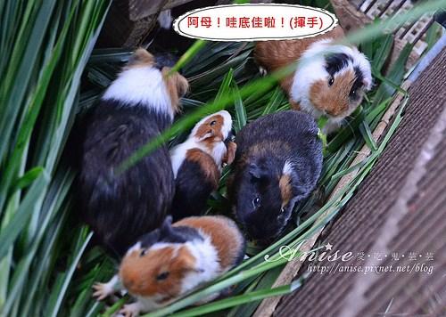 宜農牧場_031.jpg