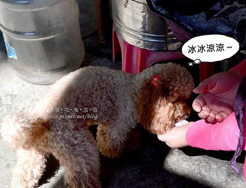 頭城農場_108.jpg