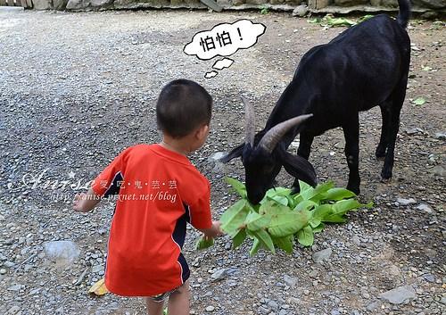 頭城農場_112.jpg