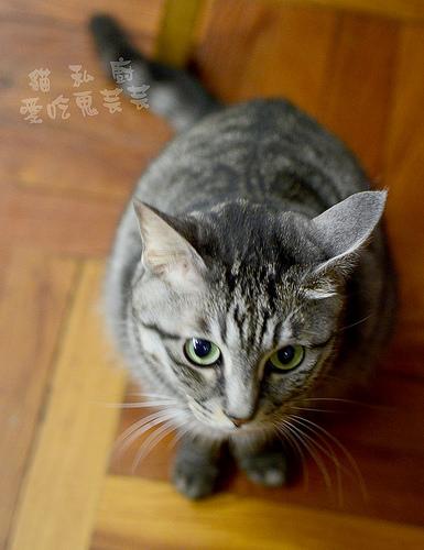貓私廚_018.jpg