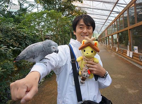 島根旅遊.松江貓頭鷹花園,好多鳥兒玩瘋啦!