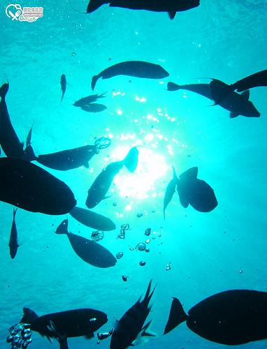關島旅遊.JNS DIVERS GUAM,揹氣瓶潛水初體驗!