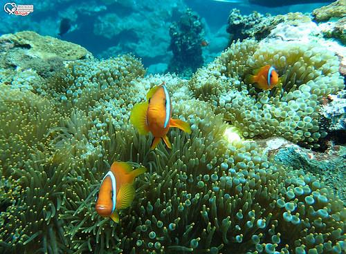 蘭嶼潛水.開元港、玉女岩、雙獅岩、藍洞、機場外礁、八代灣沈船 (岸潛+船潛)