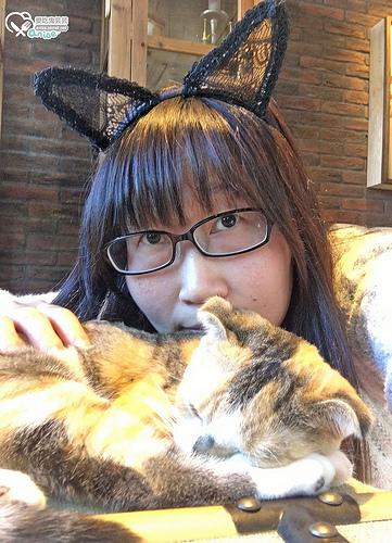 愛貓人的天堂.東京澀谷猫カフェmocha咖啡,好多貓貓啊啊啊!!!(圖超多)