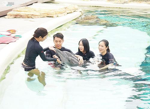 聖淘沙名勝世界:海豚園,海豚互動體驗也太可愛了吧! @愛吃鬼芸芸