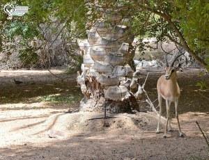 今日熱門文章:沙漠綠洲渡假村Al Maha Desert Resort & Spa @杜拜小旅行