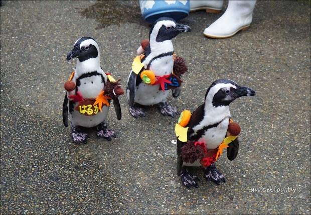島根+廣島孝親長輩團:松江花鳥園,美美的花+有趣的禽鳥們