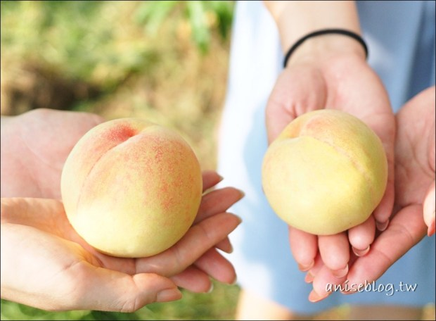 日本岡山白桃