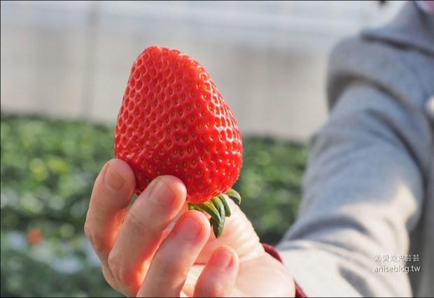 【鑽石之路】栃木縣草莓吃到飽(菓子城堡摘草莓),半小時日幣1,800夭壽划算!