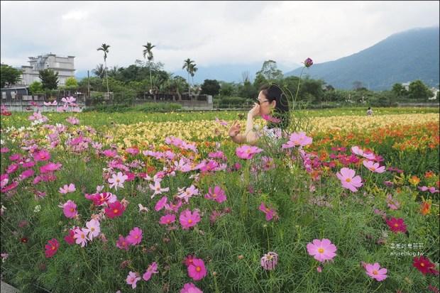 花蓮吉安 | 嘉德萱草花田 (4-6月) ,平地的彩色金針花