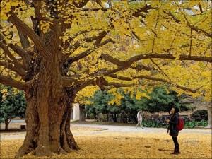 今日熱門文章:東京大學銀杏含地圖 | 本鄉校區 + 彌生校區 ( 內含東大生協食堂)