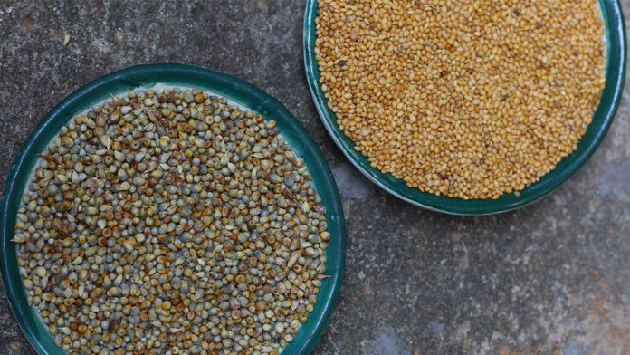 Different-type-of-Millets
