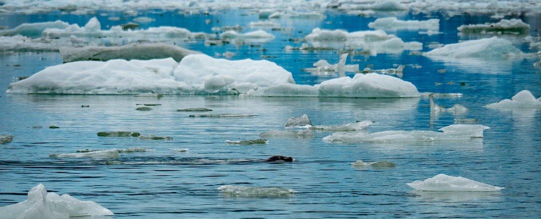 P9113384 - Cruise Diary: The Alaska Small Ship Experience