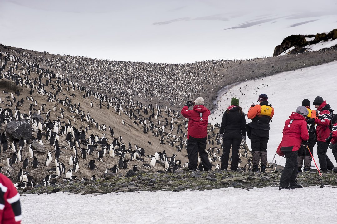 Page 29 Penguin Surveys - Expedition Cruising Antarctica
