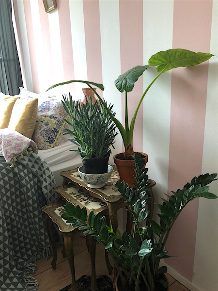 Hoe planten zorgen voor een betere nachtrust - \'Wonen\' is mijn ...