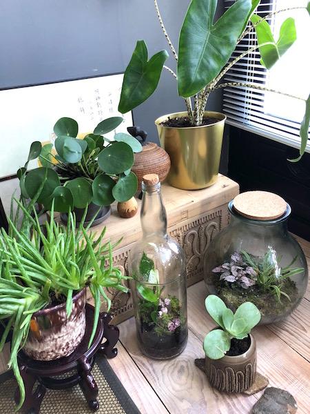 fles en planten