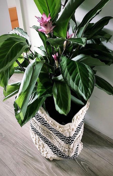 binnenkijken plant 1