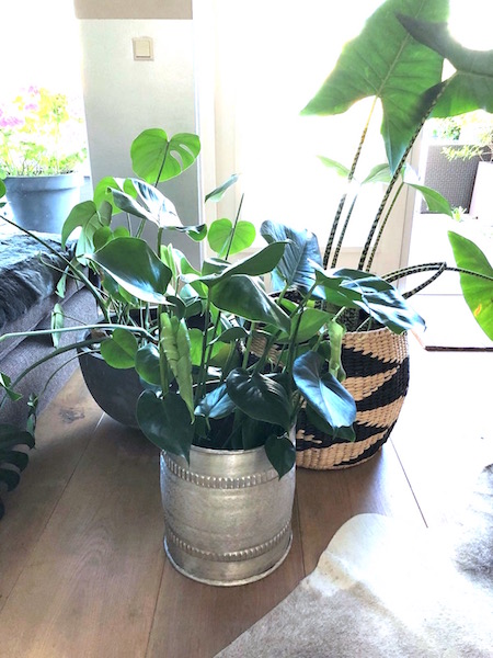 binnenkijken plant 2