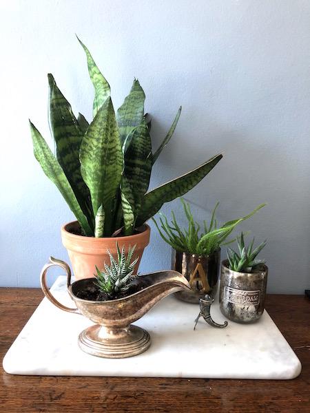 marmer blad met planten