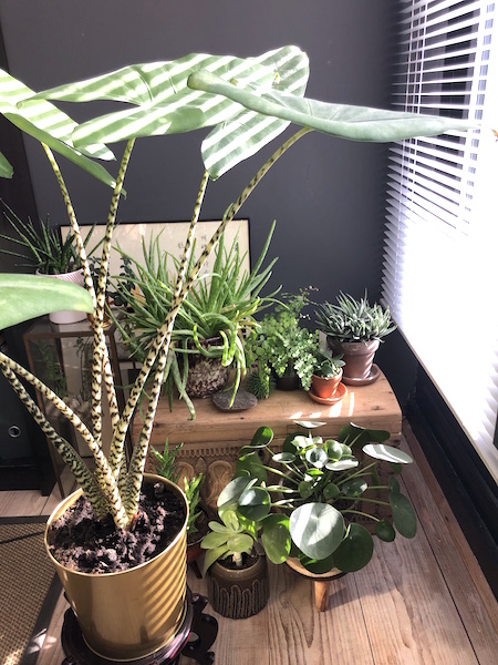 werkkamer planten 2