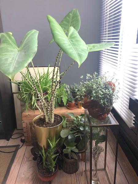 woman cave planten