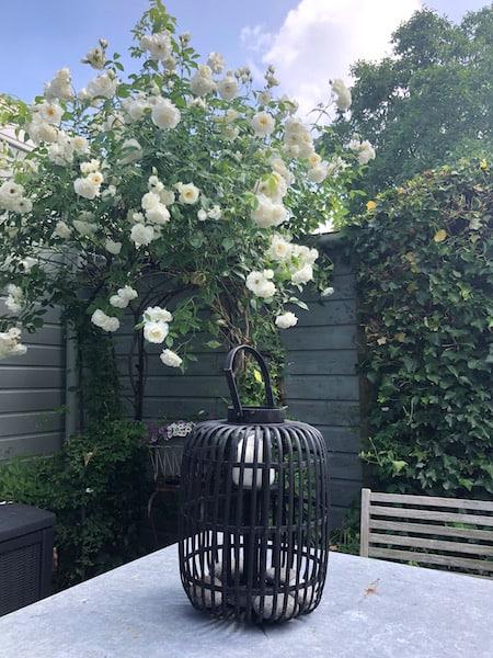 bloeiende tuin2