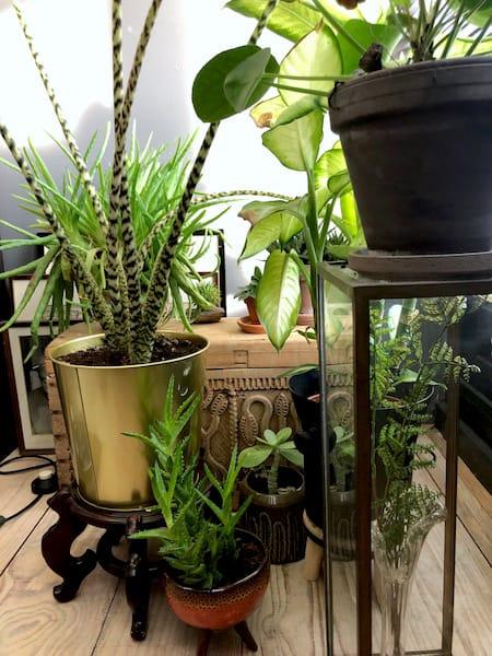 planten in home office 2