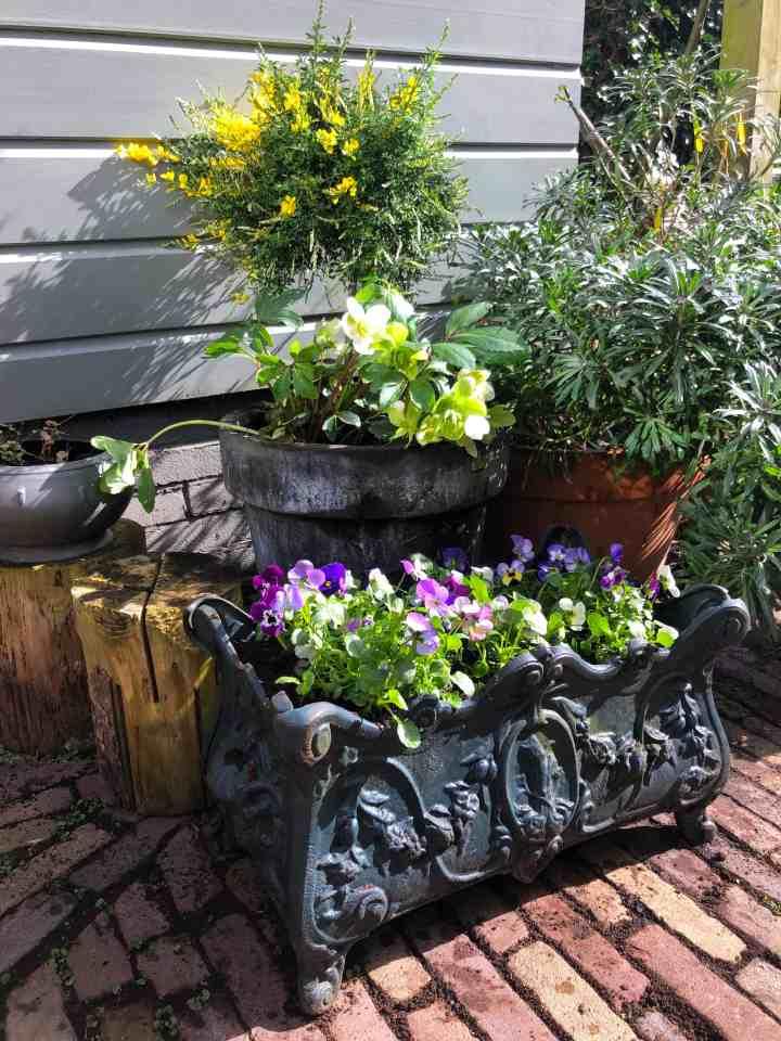 instant kleur in de tuin