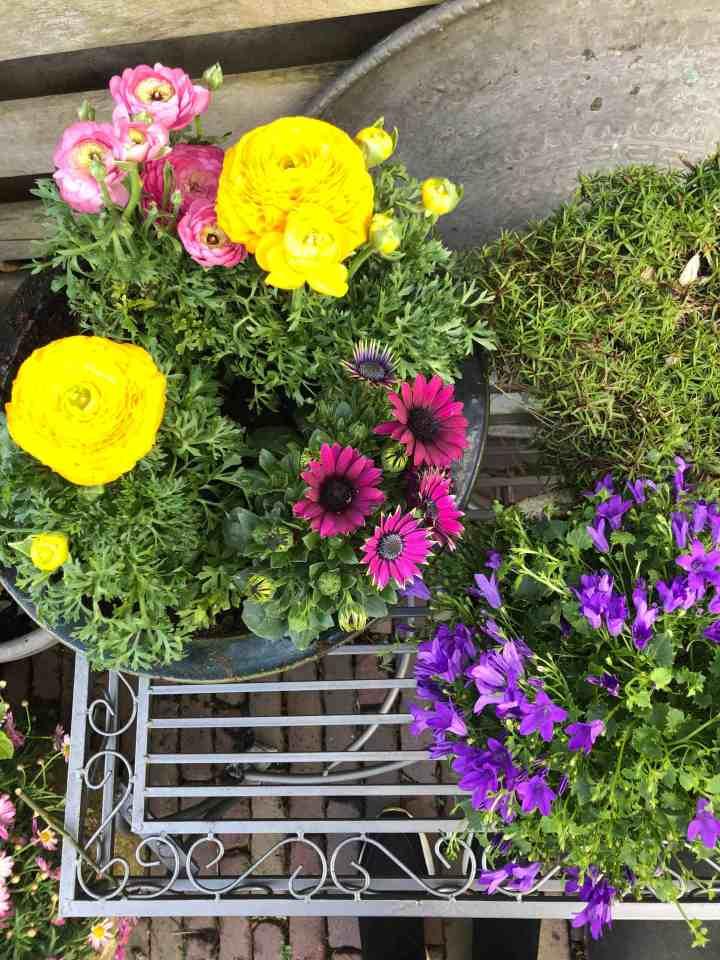 kleur in de tuin