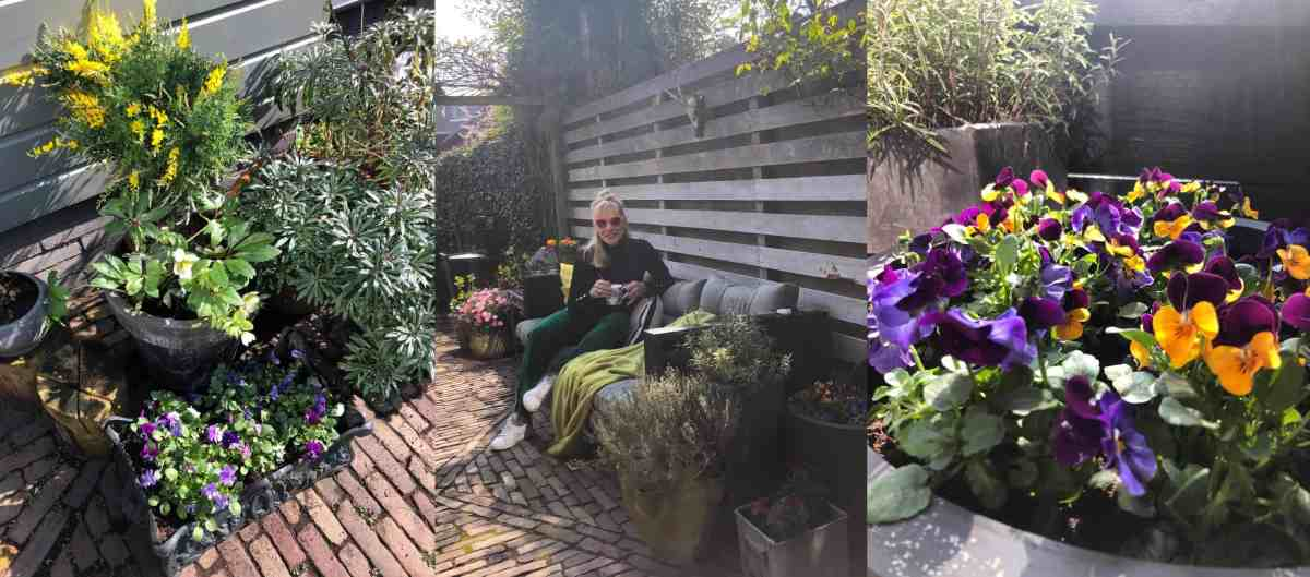 Instant kleur in de tuin (of op je balkon), zo doe je dat !