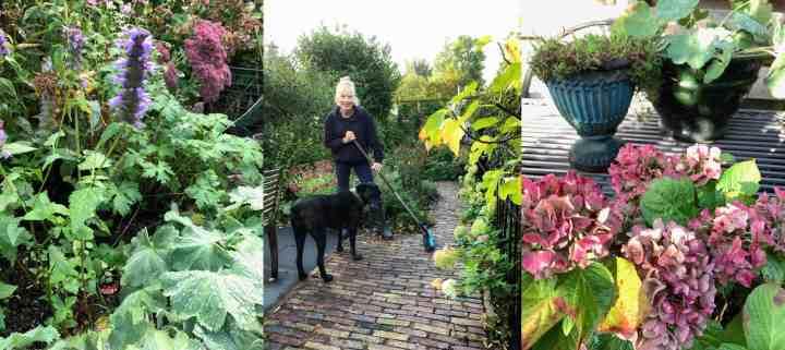 Tuin winterklaar maken & waarom ik daar niet aan doe