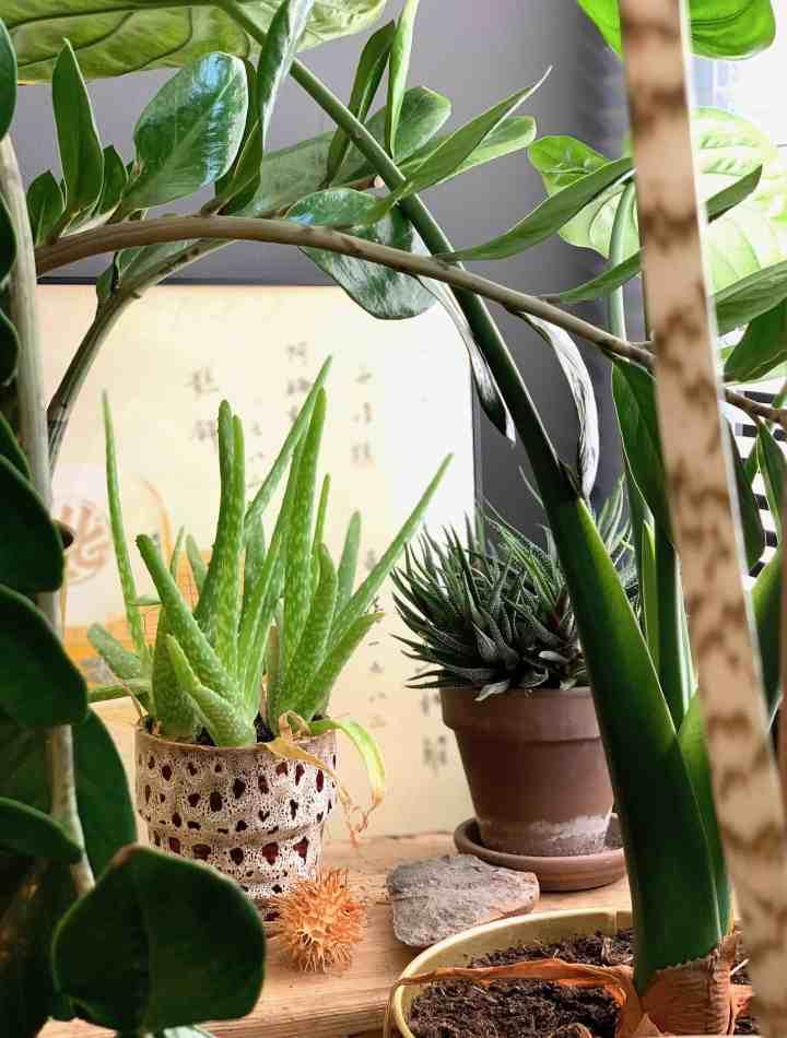 energieboost met planten