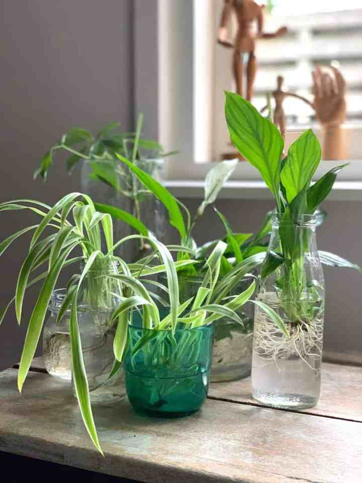 Hydroponie-planten waar je geen omkijken naar hebt