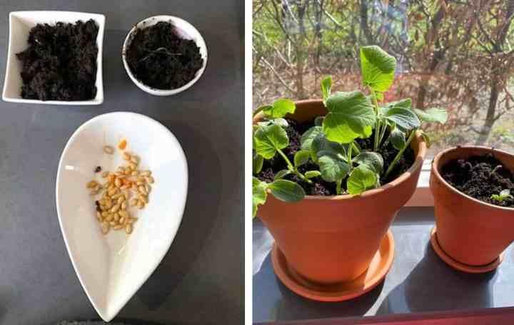 zaadjes planten