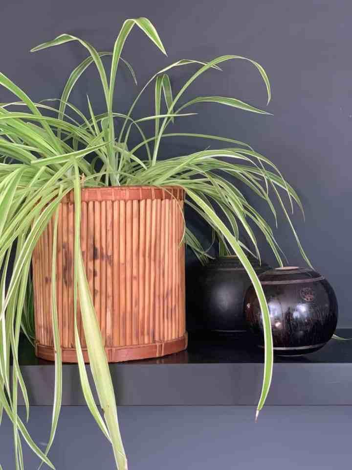 rotan, riet en bamboe