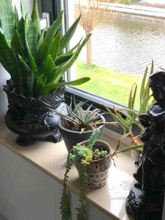 witte badkamer met planten