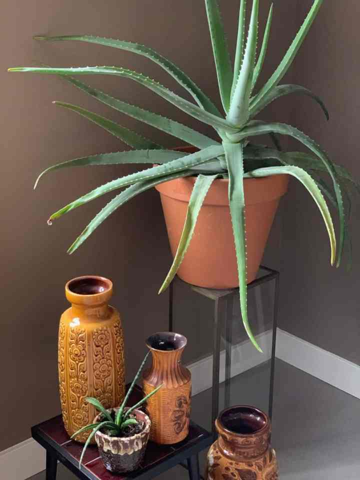 planten voor happy thuiswerkplek