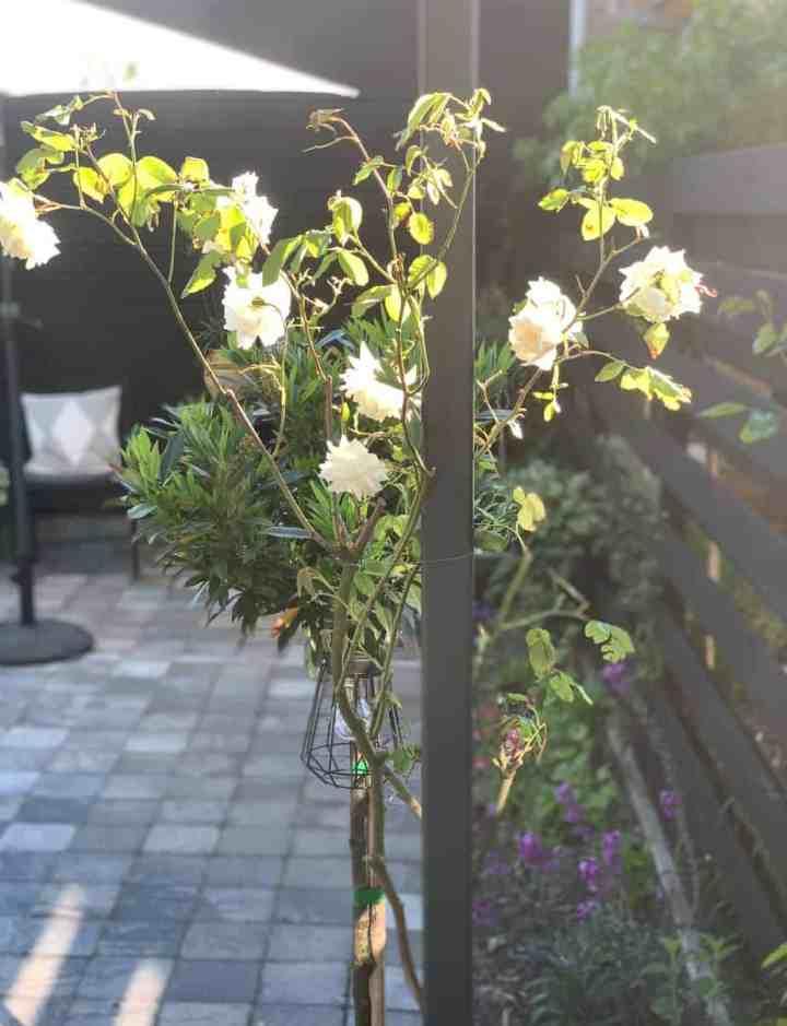 tuin inrichten