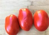 Plum or Roma tomatoes