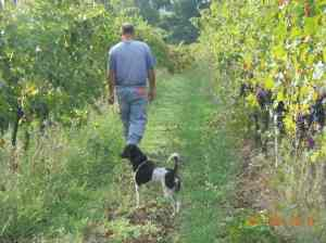 Checking out the vineyard.