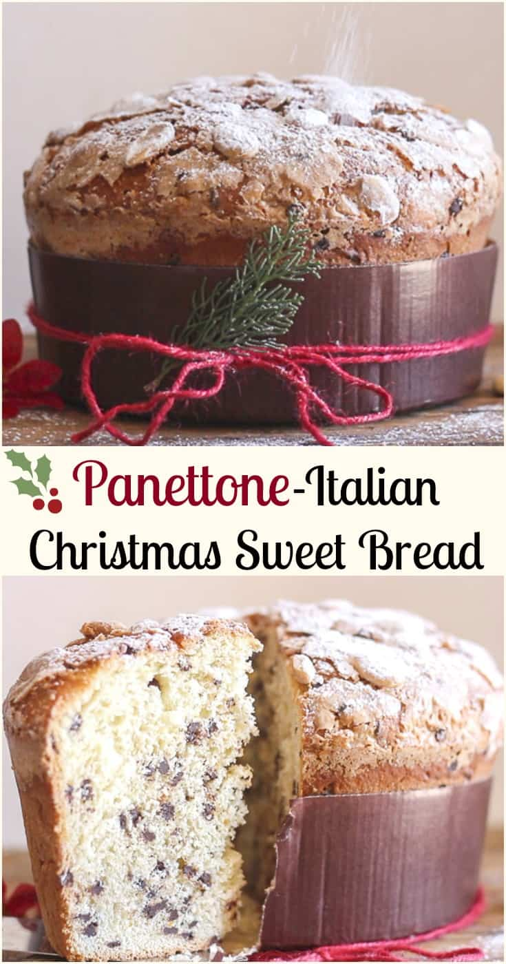 panettone an italian christmas sweet bread a not too sweet yeast bread filled with